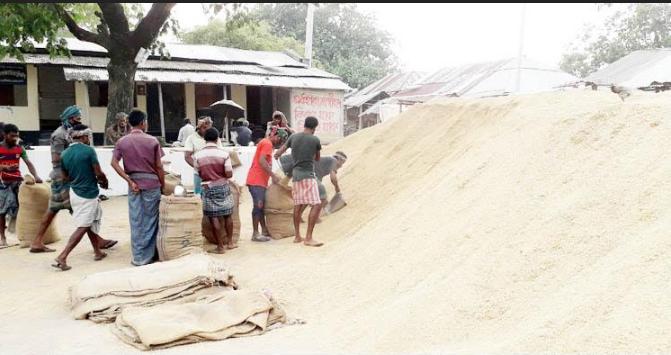 নওগাঁয় বাজারে দাম বেশি পাওয়ায় খাদ্যগুদামে ধান দিচ্ছে না কৃষকরা